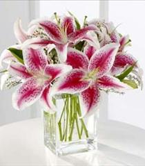 Photo of Pink Stargazer Lily Bouquet - S22-4298