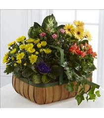 Photo of Gentle Blossoms Plant Basket - S36-4524