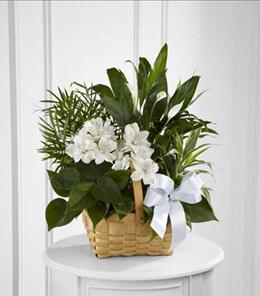 Photo of The FTD Peace & Serenity Dishgarden - S9-4454