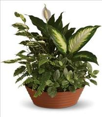 Photo of Serene Retreat Planter - T100-3