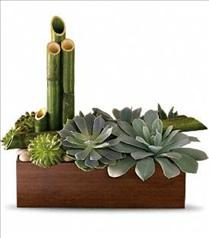 Photo of Peaceful Zen Succulent Garden - T101-1