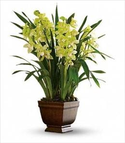 Photo of Teleflora's Splendid Orchids - T102-1