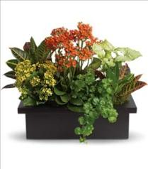 Photo of Stylish Plant Assortment - T106-3