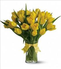 Photo of Sunny Yellow Tulips - T140-1