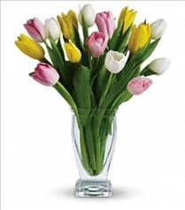 Photo of Teleflora's Tulip Treasure - T142-1
