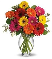 Photo of Gerbera Brights in Vase - T156-1