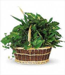 Photo of Large Basket Garden Teleflora  - T212-1