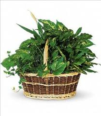 Photo of Large Basket Garden Teleflora  - T212-1