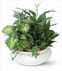 Photo of Dish Garden Planter - T212-2