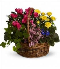 Photo of Blooming Garden Basket - T213-3