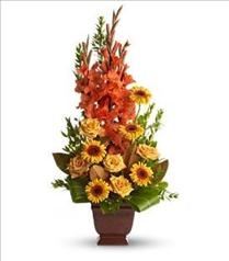 Photo of Teleflora's Sentimental Dreams - T244-1
