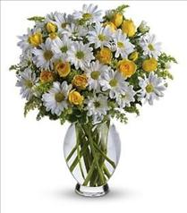 Photo of Teleflora's Amazing Daisy in Vase - T32-1