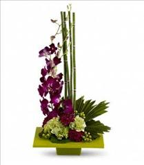 Photo of Zen Artistry with Orchids  - T81-1