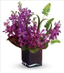 Photo of Island Princess Orchids  in Cube Vase  - T81-2