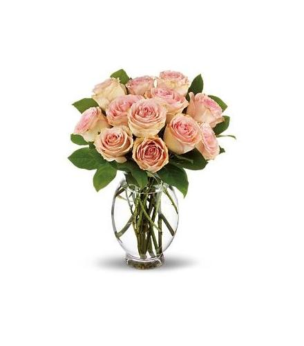 Photo of BF6461/T9-2DX (18 Roses)