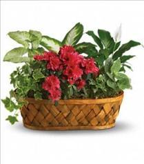 Photo of Plants Galore - T90-1