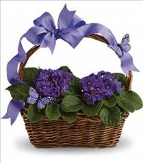 Photo of Violets And Butterflies - T92-3