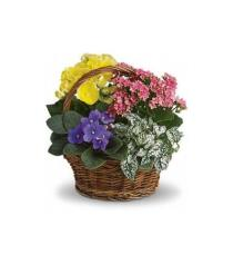 Photo of Spring Has Sprung Mixed Basket - T93-1