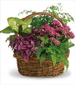 Photo of Secret Garden Basket - T96-2