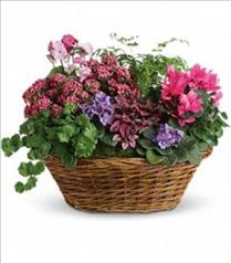 Photo of Simply Chic Mixed Plant Basket - T97-1