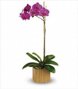 Photo of Teleflora's Imperial Purple Orchid - T98-1