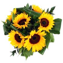 Photo of Six, Nine or Twelve Sun Flowers Gift Wrapped  - SSUUNN