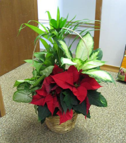 Holiday Planter with Poinsettia