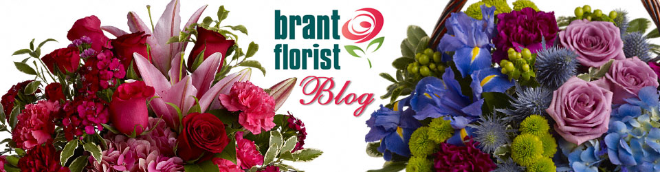 Brant Florist Blog