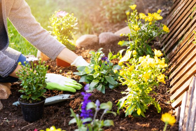 Preparing your garden planting flowers in backyard