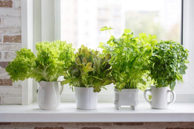 Indoor Gardening Indoor Garden