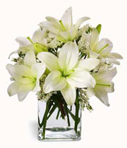 Photo of the Easter Lilies
