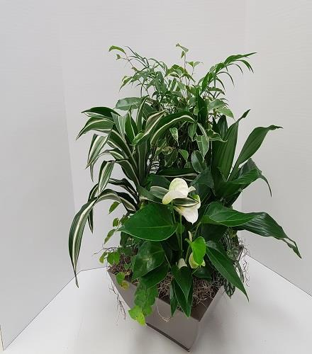 Photo of flowers: Green and White Planter
