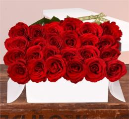 Photo of Red Roses 24  - BF7616