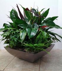 Photo of Mixed planter 100 - JJ100