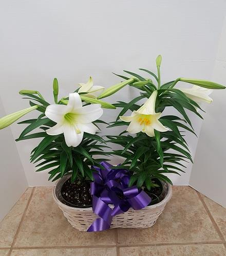 Photo of flowers: White Lily Planter