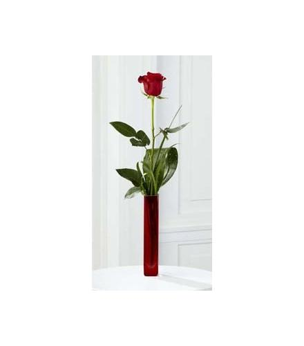 Photo of BF7159/B20-4403 (One Rose)