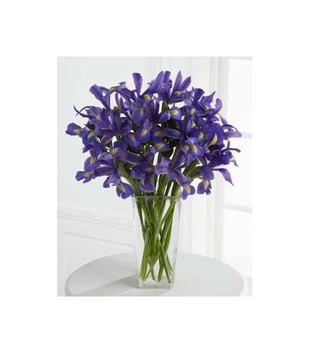 Photo of flowers:  Iris Vase