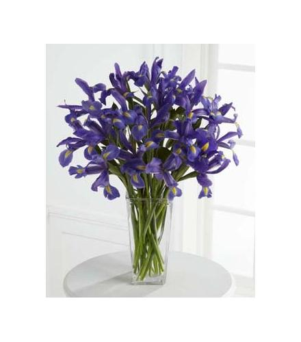 Photo of flowers:  Iris Vase