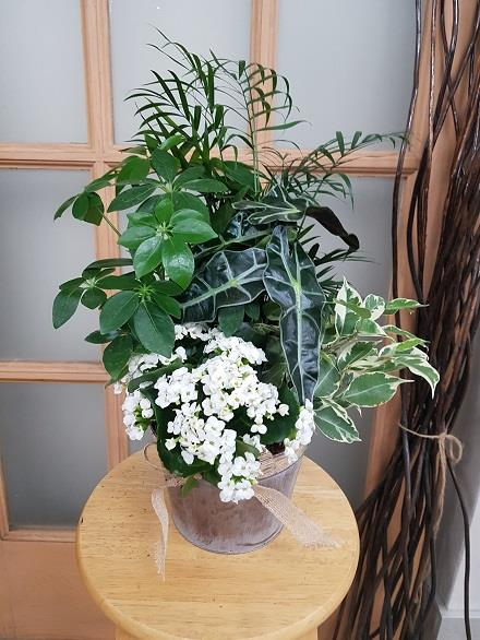 Photo of flowers: Tropical Planter BF11063