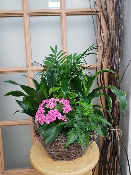 Photo of flowers: Tropical Planter BF11064