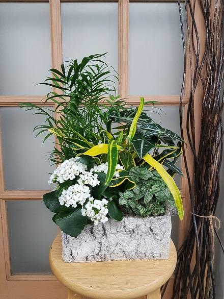 Photo of flowers: Tropical Planter BF11065