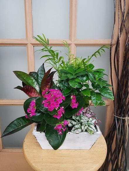 Photo of flowers: Tropical Planter BF11066