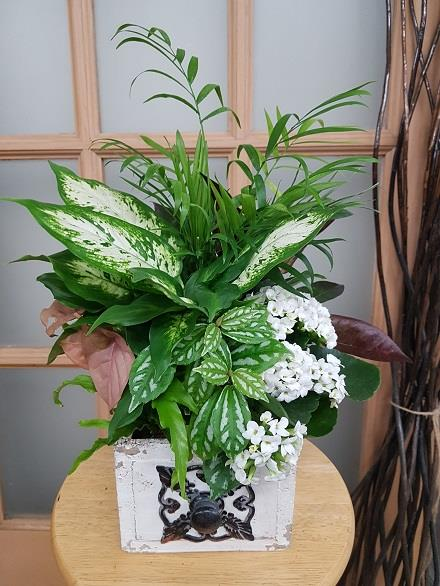 Photo of flowers: Tropical Planter BF11067