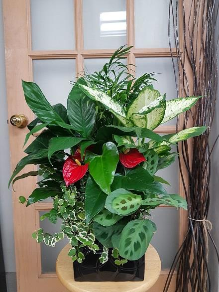 Photo of flowers: Tropical Planter BF11069