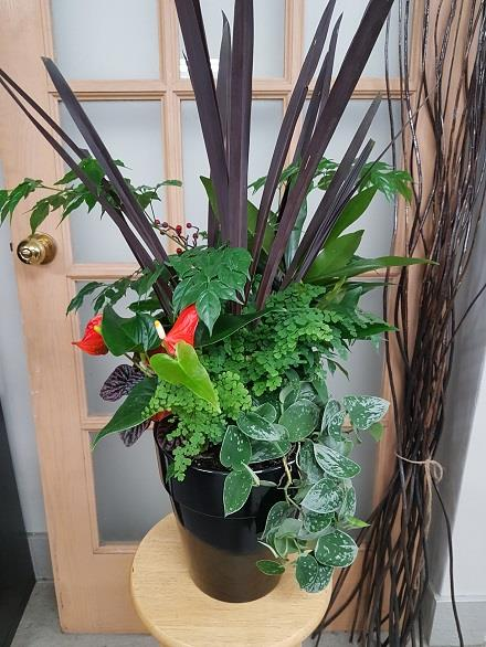Photo of flowers: Tropical Planter BF11070