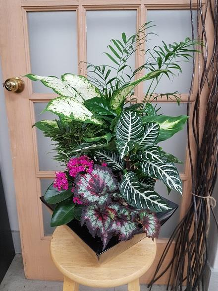 Photo of flowers: Tropical Planter BF11071
