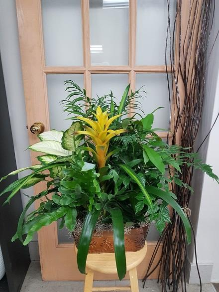 Photo of flowers: Tropical Planter BF11073