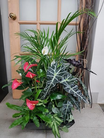 Photo of flowers: Tropical Planter BF11075