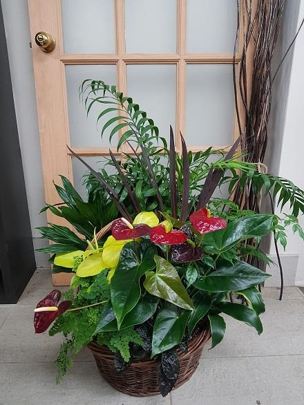 Photo of flowers: Tropical Planter BF11076