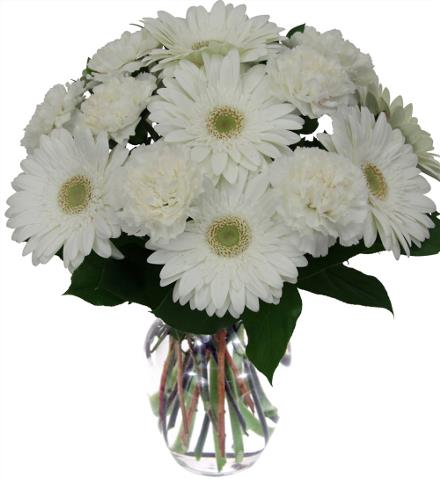 Photo of flowers: White Gerbera Vased